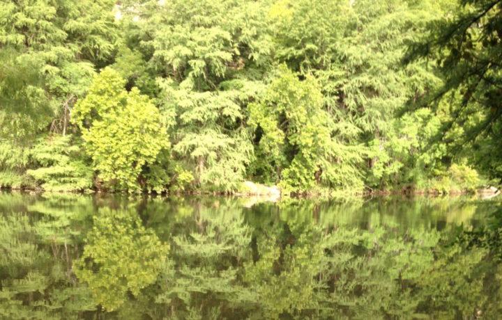 West Lake Hills Red Bud Isle E1462408662807